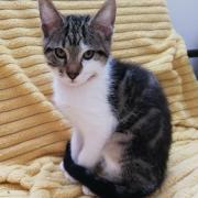 Remus- M - Né le 04/03/2020 - Adopté en juin 2020