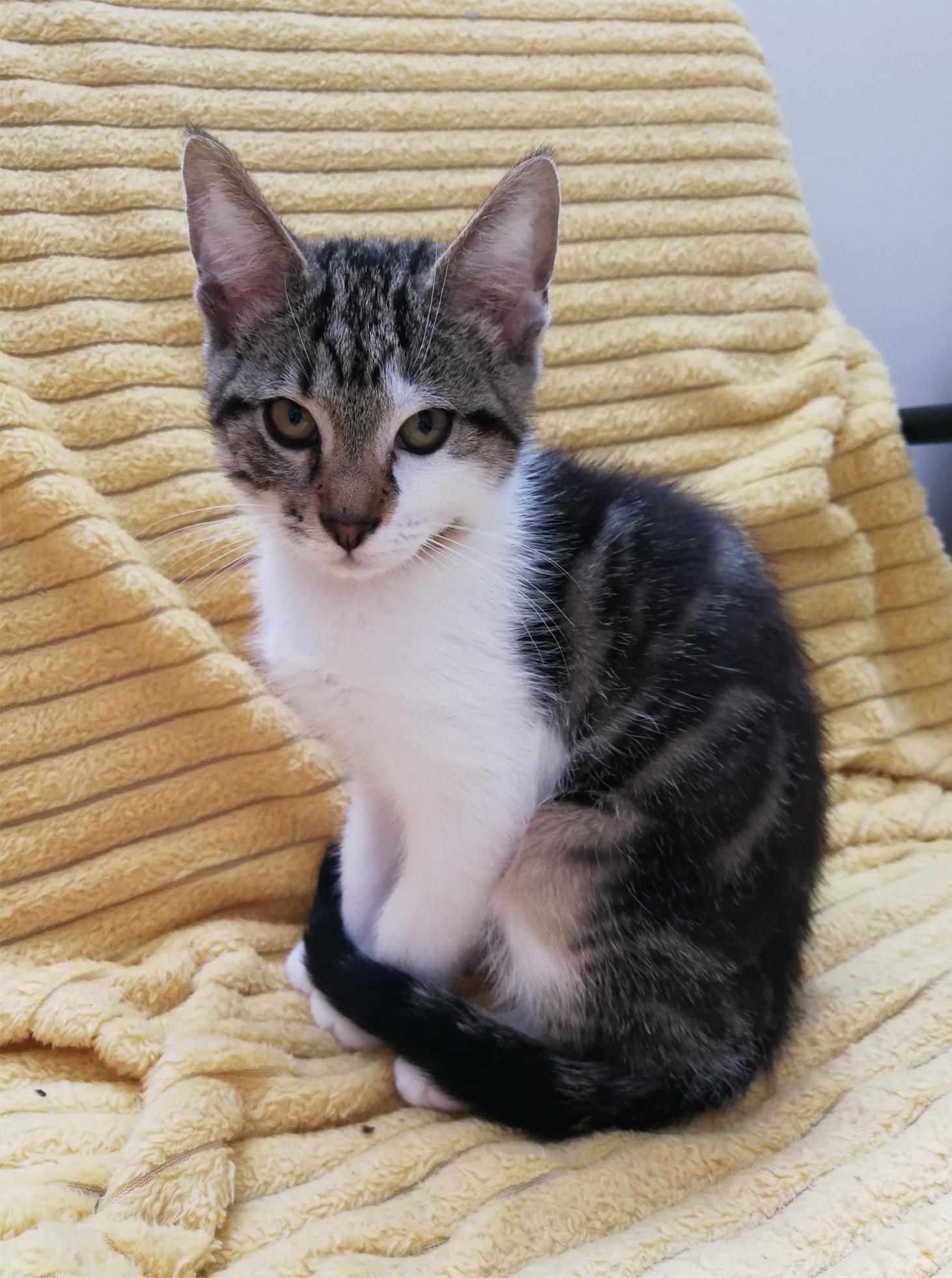 Remus- M - Né le  04/04/2020 - Adopté en juin 2020