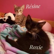 Resine et roxie - F - Nées le 06/06/2020 - Adoptées en septembre 2020