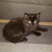Ringo - M - Né le 01/04/2020 - Adopté en juillet 2020