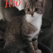 Rio - M - Né le 10/06/2020 - Adopté en septembre 2020