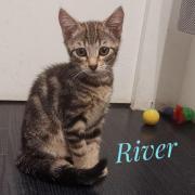 River - M - Né le 26/04/2020 - Adopté en septembre 2020