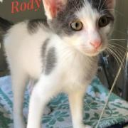 Rody - M - Né le 15/5/2020 - Adopté en septembre 2020