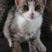 Romeo - M - Né le 10/06/2020 - Adopté en septembre 2020