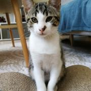 Romulus- M - Né le 04/03/2020 - Adopté en juin 2020