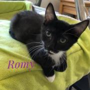 Romy - F - Née le 15/5/2020 - Adoptée en septembre 2020