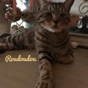Roudoudou - M - Né le 01/01/2018 - Adopté en juin 2020