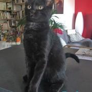 Rufus - M - Né le 15/04/2020 - Adopté en juillet 2020