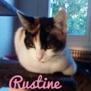 Rustine - F - Née le 15/12/2019 - Adoptée en juin 2020