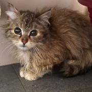 Sesame - F - Née le 1/10/2020 - Adoptée en mai 2021