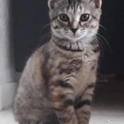Sweety - F - Née 15/04/2021- Adopté en août 2021