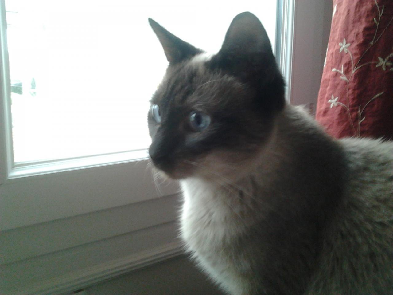 VANILLE - F - Née en Janvier 2009 - Adoptée en Novembre 2012