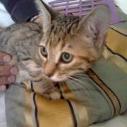 GLAMOUR II - F - Née le 01/07/2011- Adoptée en Septembre
