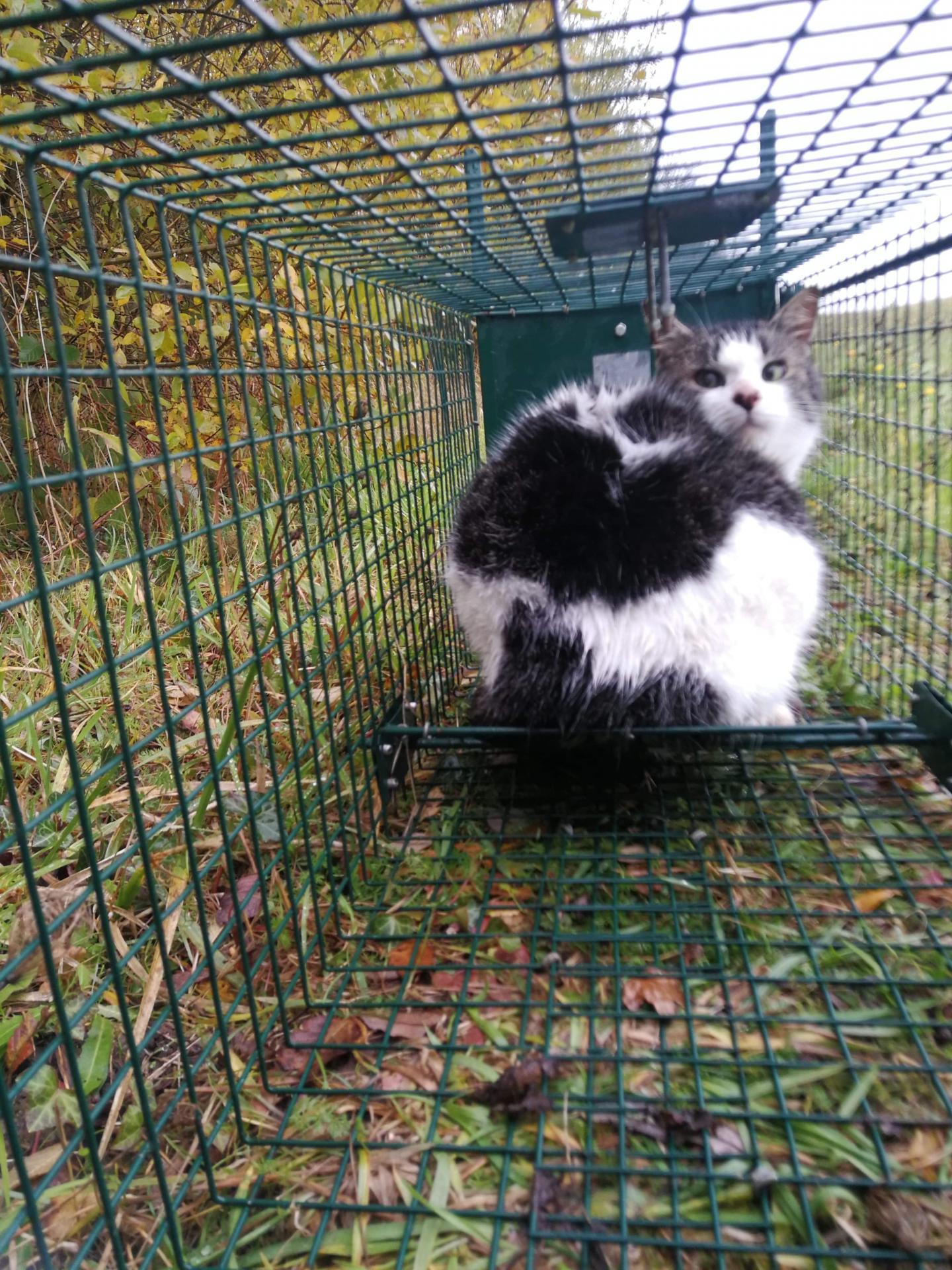 1ere chatounette trappee