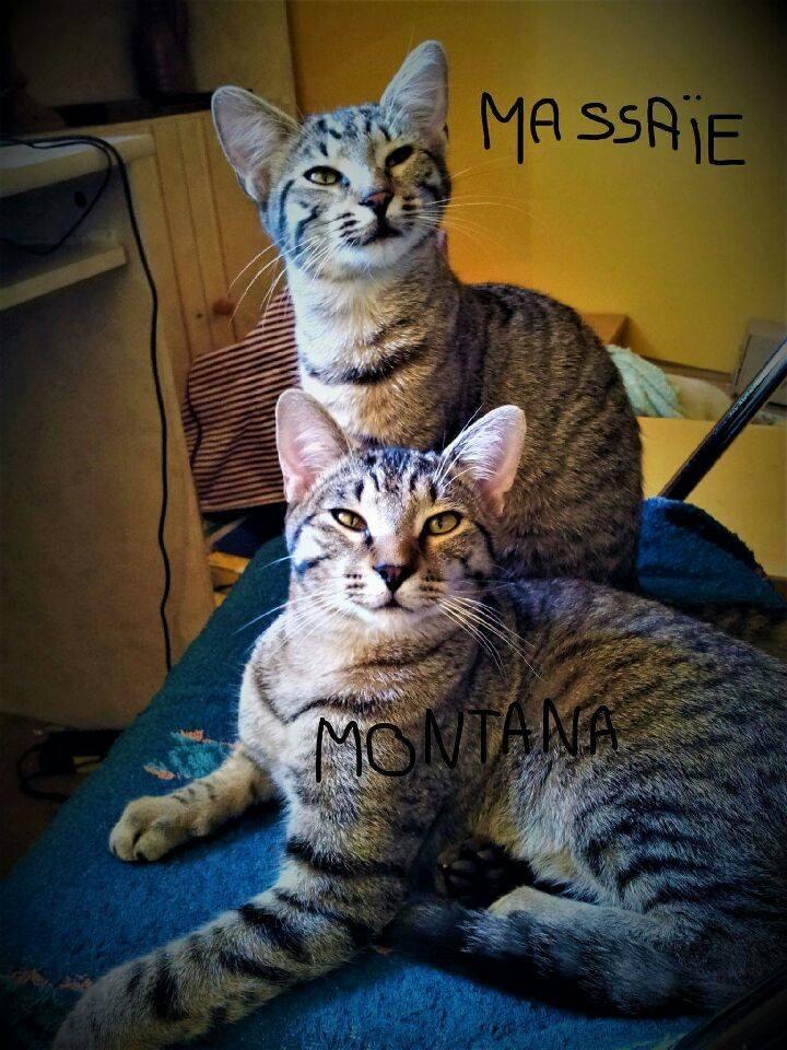 Massaie montana 3