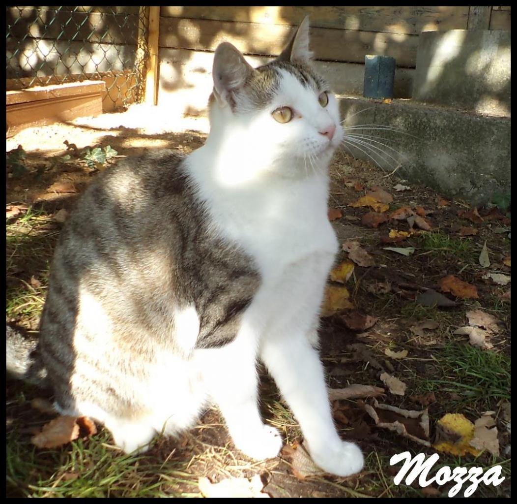 Mozza4 1