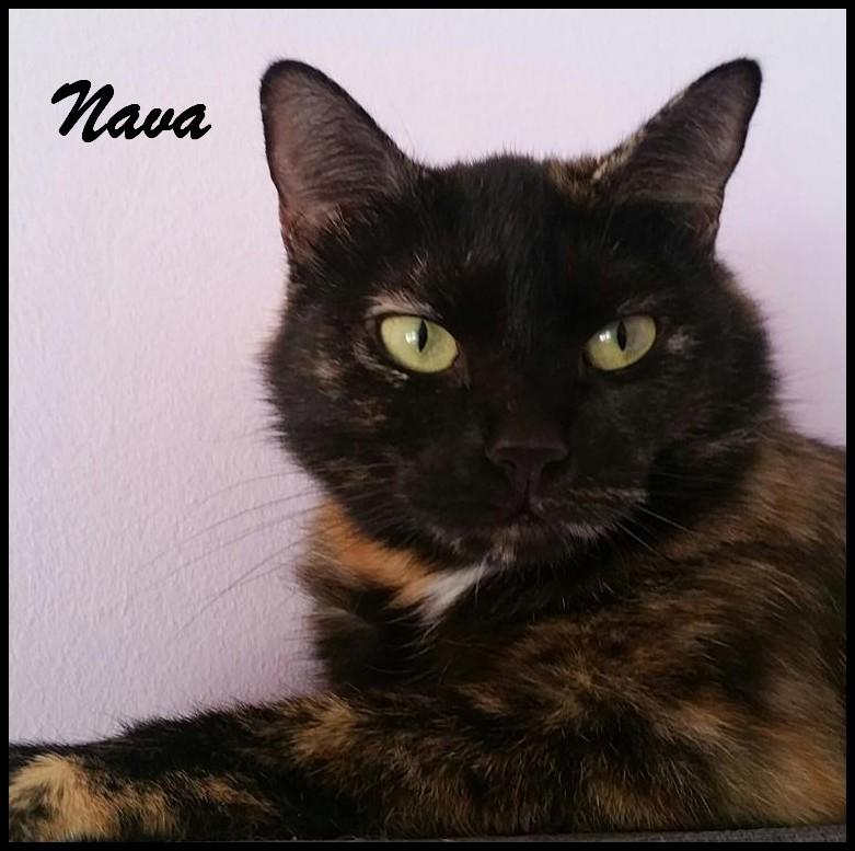 Nava1