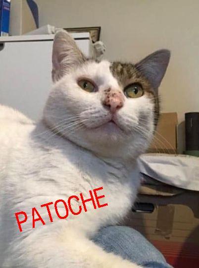 Patoche 4