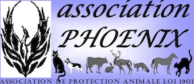 Association Phoenix - Chats à adopter